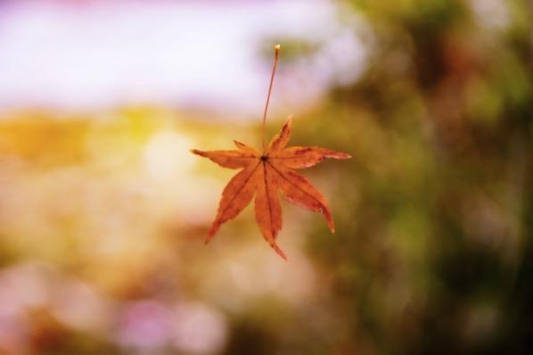 浮いたような紅葉
