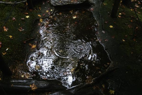 旧竹林院の庭園水たまり