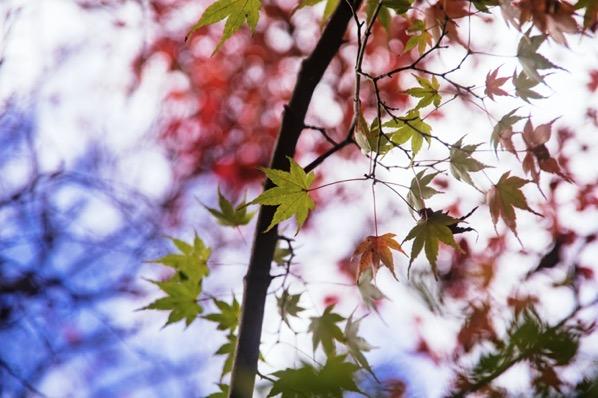 京都東山の紅葉