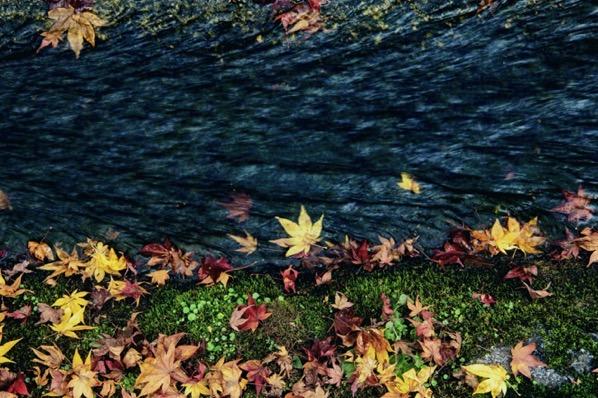 水にある紅葉