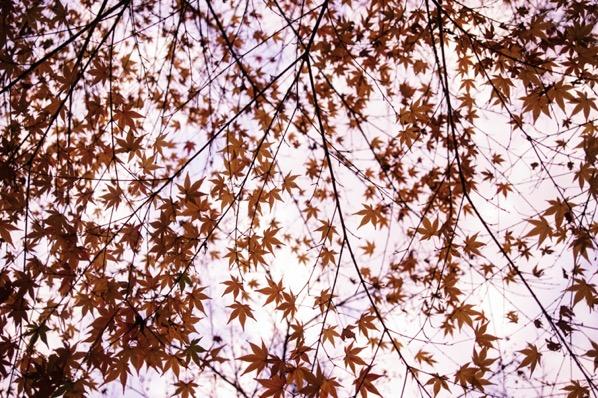 茶臼山の紅葉